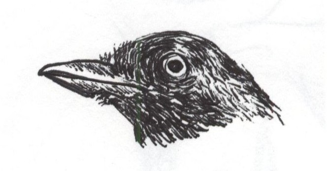 cropped-bird-ink.jpg